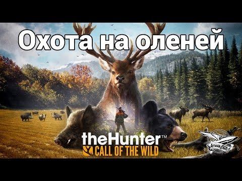 Охота на бобра, как охотиться на бобров Сибирский охотник