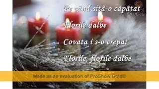 Stefan Hrusca-Florile dalbe (Versuri)