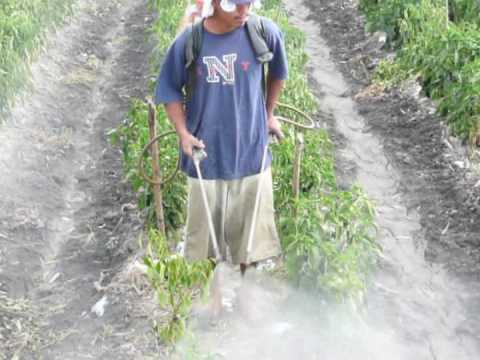 Lethal Pesticide