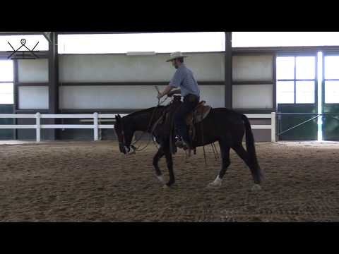 Riding off the Bridle Bit - When is my horse ready? | Developing the Bridle Horse