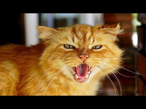Я почти дремала, когда засуетился и нервно замяукал кот. Рыжик вырвался и побежал к ванной