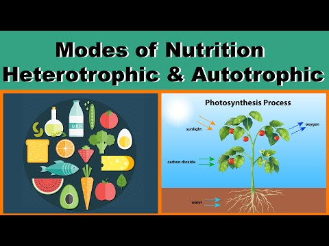Nutrition | Modes of Nutrition | Heterotrophic & Autotrophic | Biology | Science | LetsTute