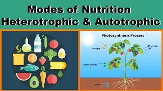 Nutrition | Modes of Nutrition | Heterotrophic & Autotrophic | Biology | Science | LetsTute