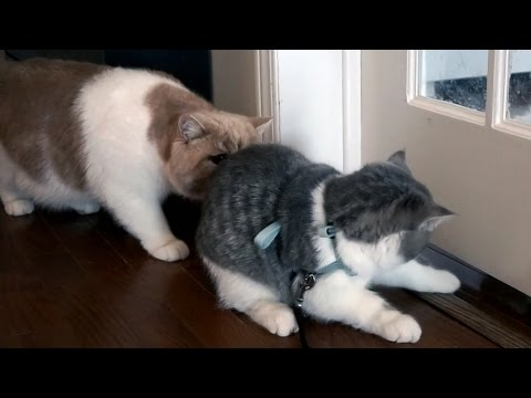 Cat loves to sniff bum