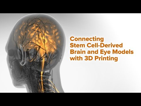 Connecting Stem Cell-Derived Brain and Eye Models with 3D Printing