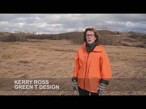 """Greening Rooftops in Alberta: People, Place + Projects"" by Kerry Ross"