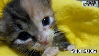 아기고양이 150g 에서 175g 컸어요 (엔딩 KMR…
