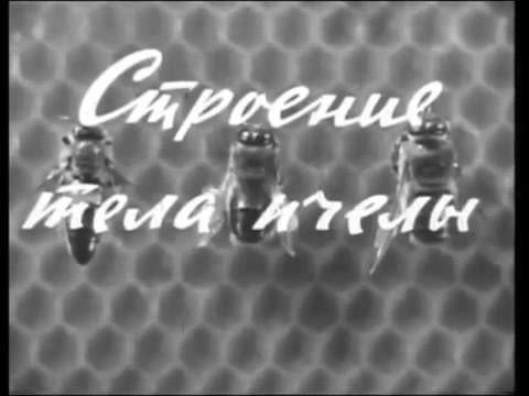 Пчеловодство. Раздел I. Биология пчелиной семьи. Учебный кинокурс. Центрнаучфильм. 1967 год