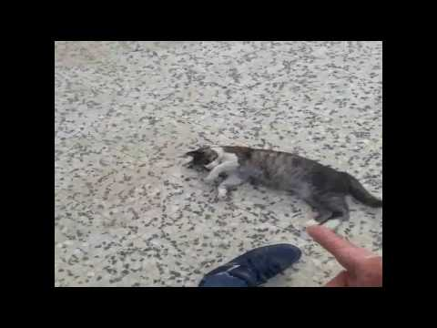 How to kill a cat in 10 seconds !! Must Watch !!