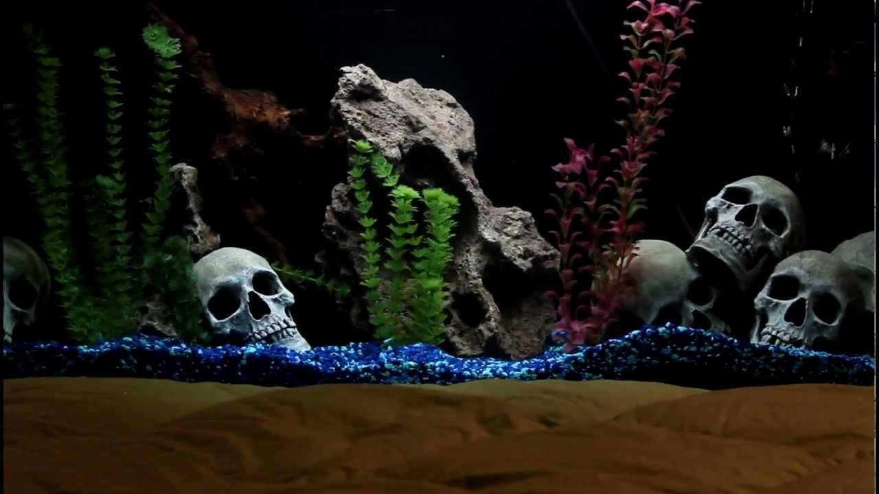Fish Tank Headboard Youtube