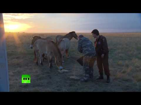 Putin visits reserve for wild horses and sets 6 of them free