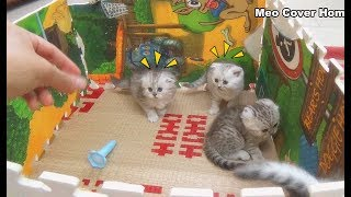 All Kittens In Traps Playing Together | Meo Cover Home !