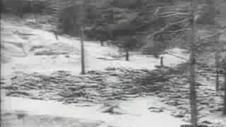 Katyn massacre in Soviet union. Horror.