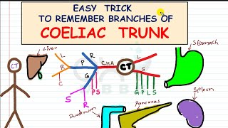 Easy Trick - For Branches of Coeliac Trunk