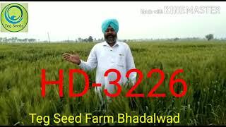 Wheat HD-3226 ਬਾਰੇ ਜਾਣਕਾਰੀ।