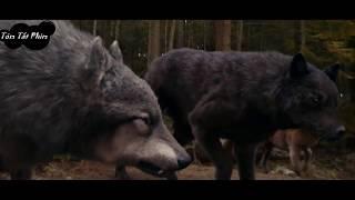 Tóm tắt nội dung phim Nhật Thực - Eclipse - phần 3 của seri phim Chạng Vạng