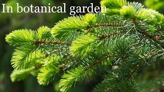 Relax - Nature - Botanical garden - Релаксация - Природа - Ботанический сад