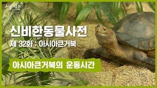 신비한동물사전 32화 : 아시아큰거북의 운동시간 (As…