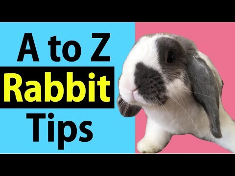 Rabbit Tips Dictionary A to Z (Golden Tip Included)