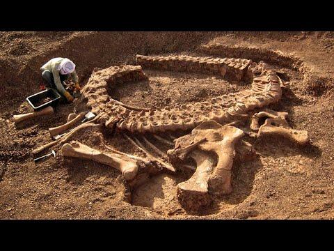 Археологи измерили температуру динозаврам, они такого не ожидали. Самые необычные находки
