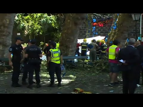 Multiple Deaths From Fallen Tree in Portugal