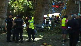 Multiple Deaths From Fallen Tree in Portugal
