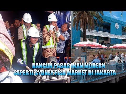 Menteri Susi Bangun Pasar Ikan Modern Jakarta Sekelas Sydney Fish Market, Anies: Tak Berbau