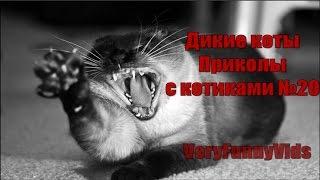 Месть котиков [Агрессивные коты] [Подборка приколов с котами № 20 2016] [Cats Being Jerks]