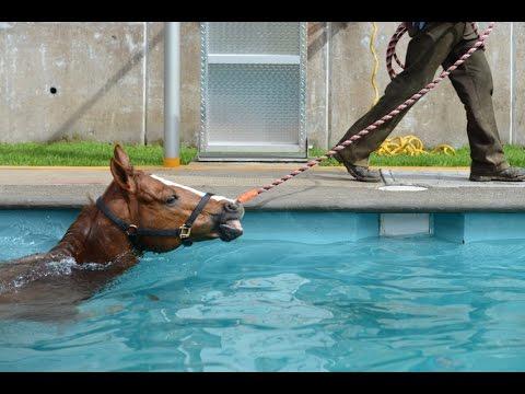 C mo realizar la preparaci n f sico atl tica de caballos for Costo para construir una piscina