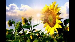 Rising Sun-George Harrison