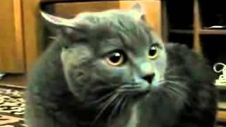 Кот сильно возмущается и матерится