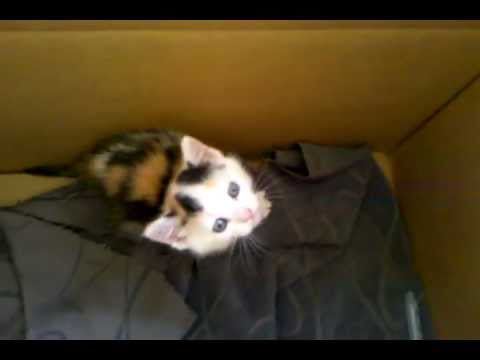Newly found kitten on the way home.
