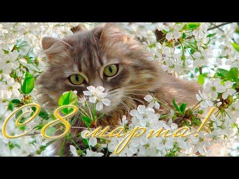 Поздравление с 8 марта от кота - Видео приколы смотреть
