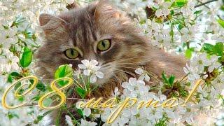 Поздравление с 8 марта от кота