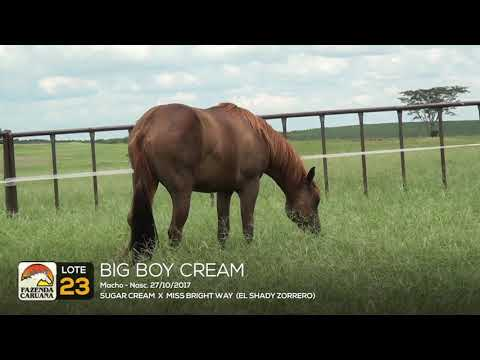 LOTE 23 - BIG BOY CREAM