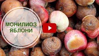 Монилиоз яблони ➡ Боремся с опасным заболеванием(, 2017-06-18T10:41:41.000Z)