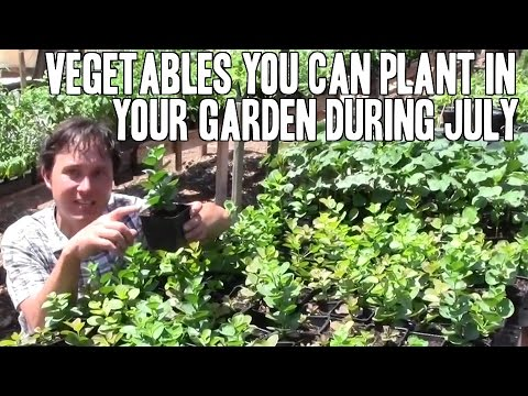 Vegetables You Can Plant in Your Garden During July