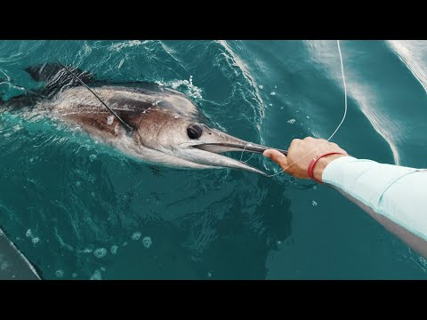 CATCHING MASSIVE SAILFISH IN A TINY BOAT!