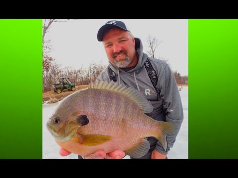 Ice fishing for GIANT Bluegill,  4k