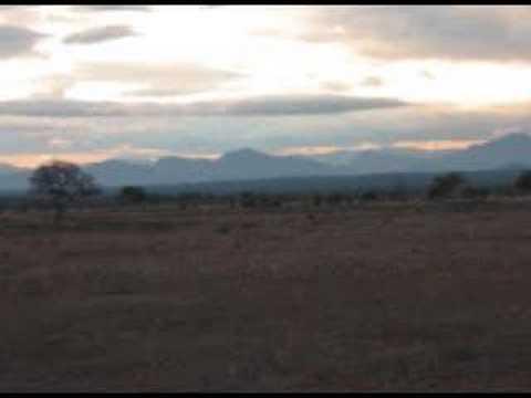 Mikumi Safari