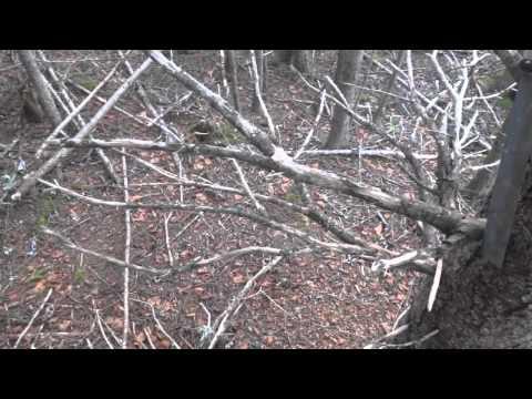 Japanese Garden Machete - Limbing, Felling, And Bucking