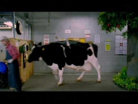 Greg Cala: Lucky Supermarket Commercial