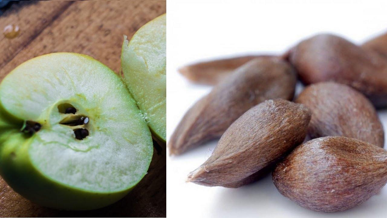 Выращивание подвоев яблонь сеянцев. Заготовка семечек яблок