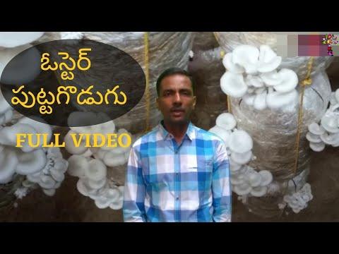 Mushroom Cultivation And Training (Telugu, Tamil, English)  | Thaja Mushrooms | Vamci Krishna Reddy