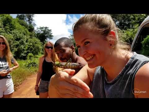 TRAVEL VLOG #5 | Suriname: Een trip naar de Voltzberg - Raleighvallen Nature Reserve