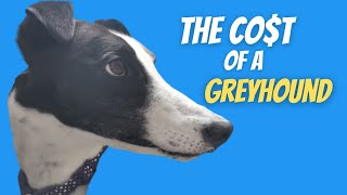 The cost of a Greyhound