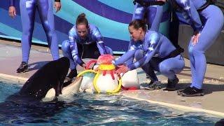 Makani gets his birthday cake at SeaWorld San Diego 2-14-15