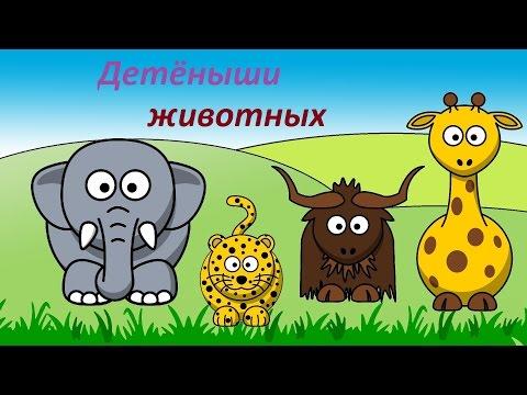 Как называют детей животных