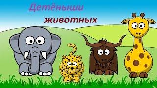 Детёныши животных. Обучающие и развивающие видео для детей