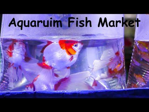 World Biggest Aquarium Fish Market in Bangkok, Thailand